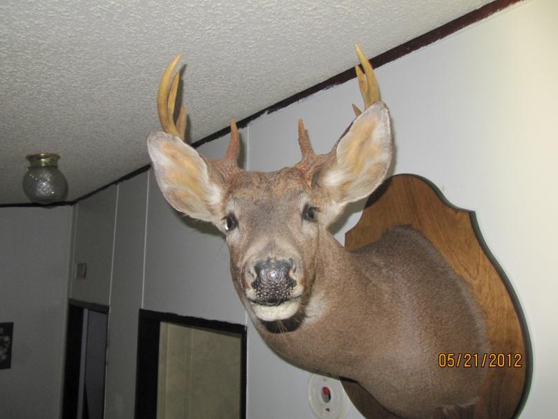 got my mount back ,,,aka bigboy-001-jpg