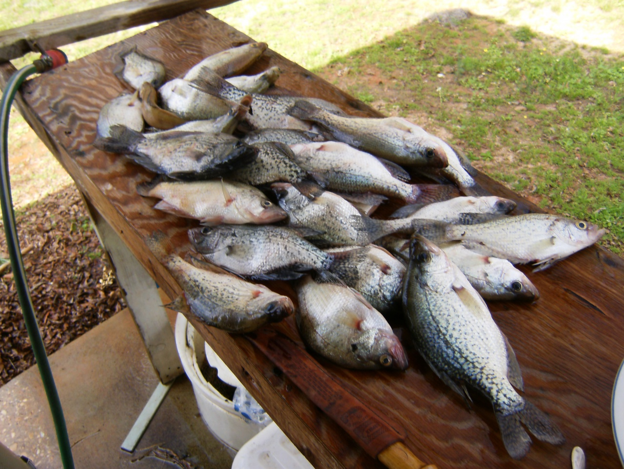 Cod and me and the crappie tree-002-jpg