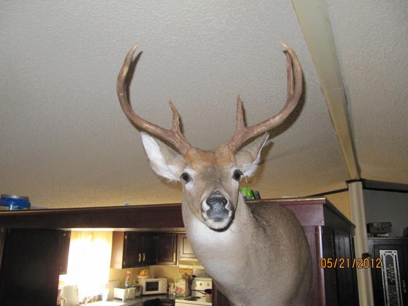got my mount back ,,,aka bigboy-003-jpg