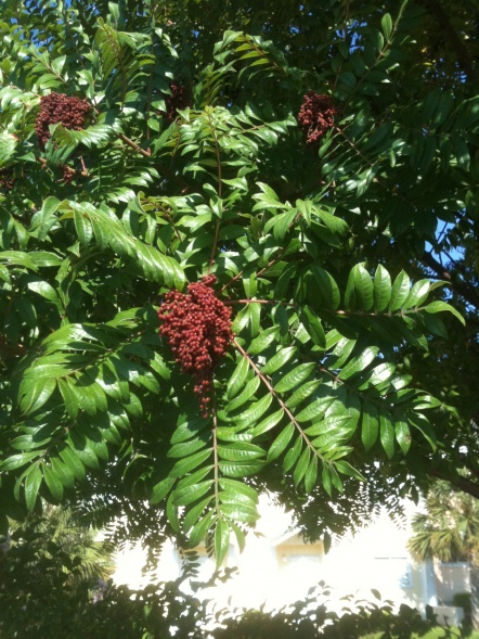 What kind of tree is this?-004-jpg