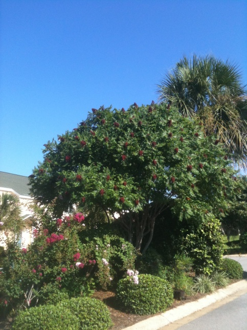 What kind of tree is this?-005-jpg