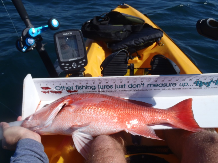 Personal best snapper and grouper-007-jpg