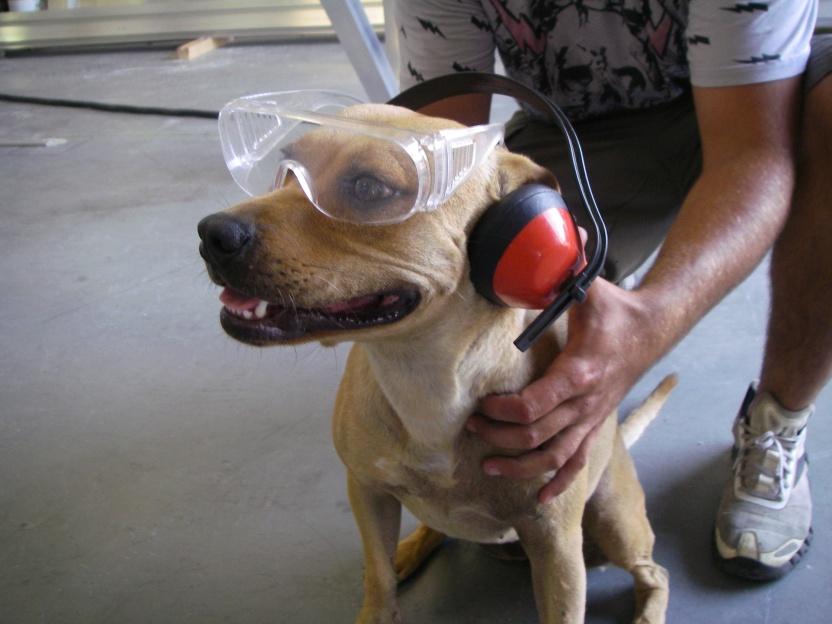 Warning: Saftey dog is watching you-008-jpg