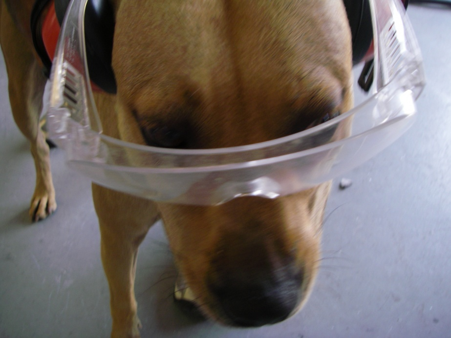 Warning: Saftey dog is watching you-010-jpg