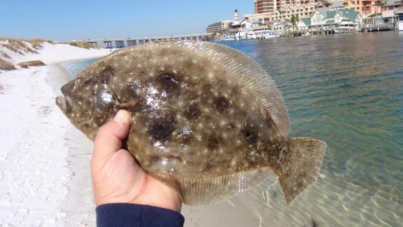 Destin Harbor flounder-021-jpg