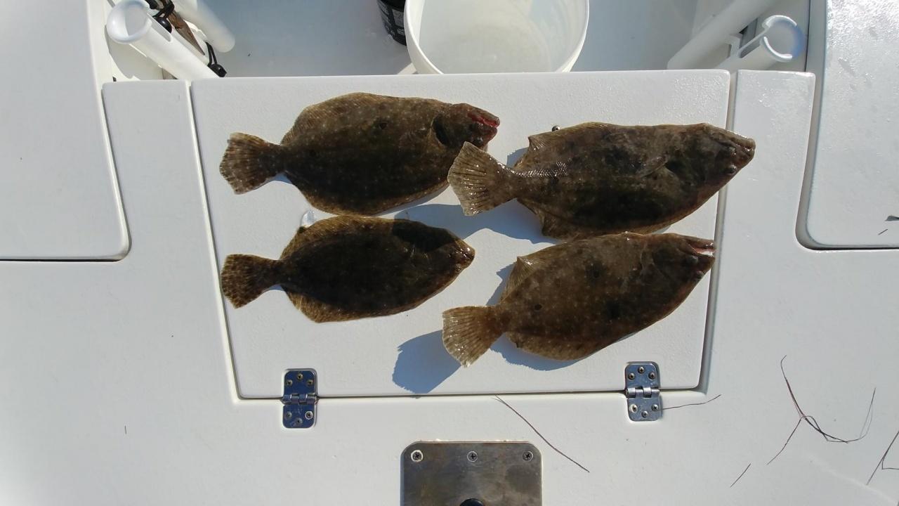 Flounder doing Ok-0730181703a_1533316966052-jpg