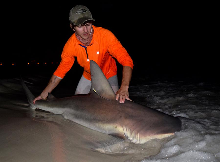 1-5-17 [Thick 85'' Sandbar Shark]-1-5-85-sandbar-personal-record-jpg