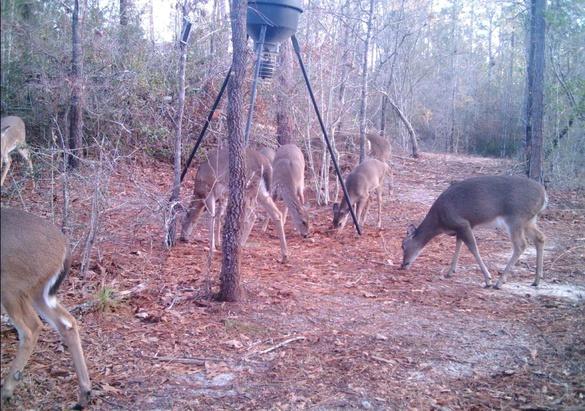 Deer Test-1-jpg