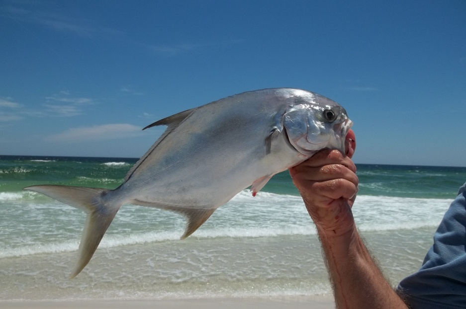 "18"" Pompano for a Total of 8 on Saturday-100_2108-jpg"