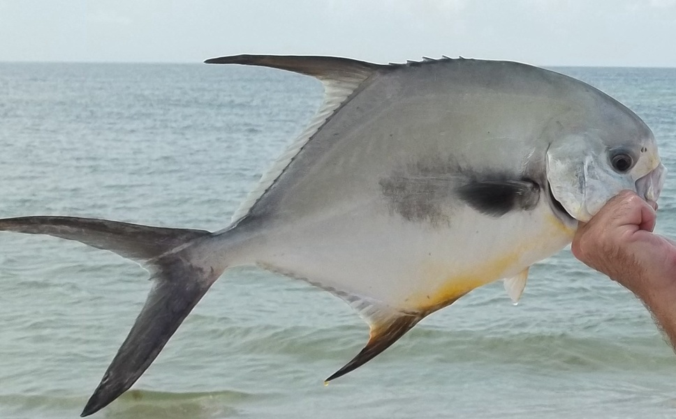 "22 1/4"" Pompano and 10 more Wow Wow Wow what a day!!!-100_2254a-jpg"