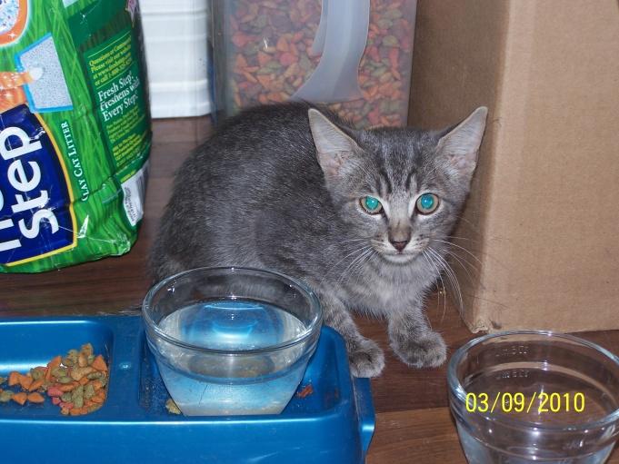Rescued kittens from woods.-100_2496-jpg