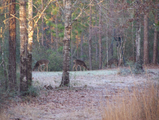 Deer Test-100_3983-jpg
