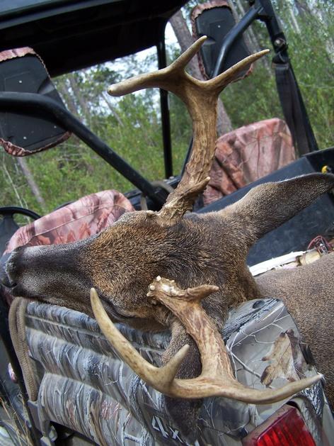 Deer Test-100_4013-jpg