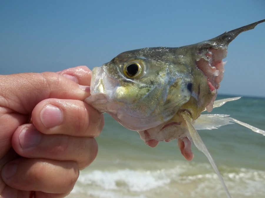 """19"""" Pompano out of 35 Keepers-101_2200-jpg"""