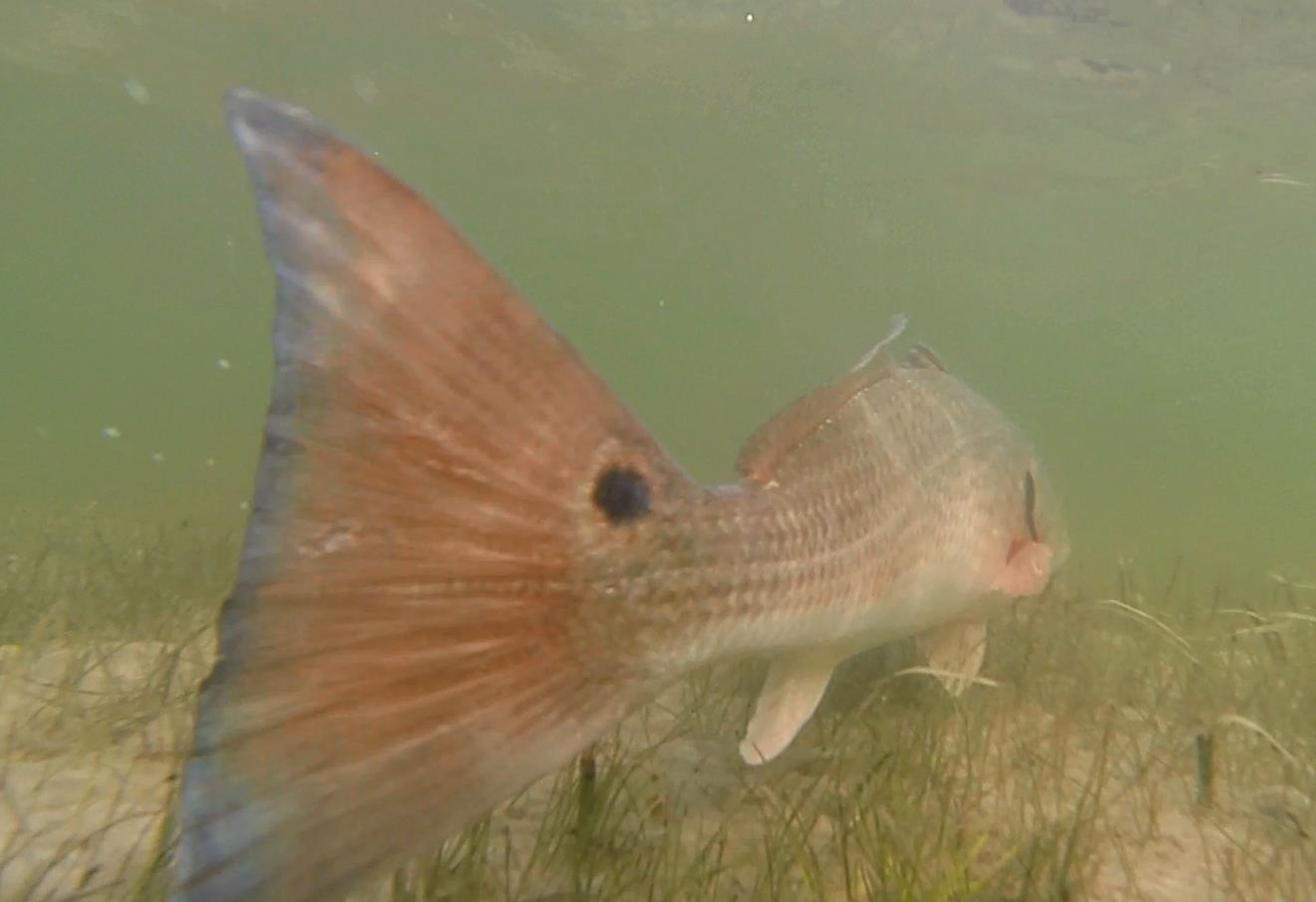 fish tale-10914878_1127399463952424_484637348821418671_o-jpg