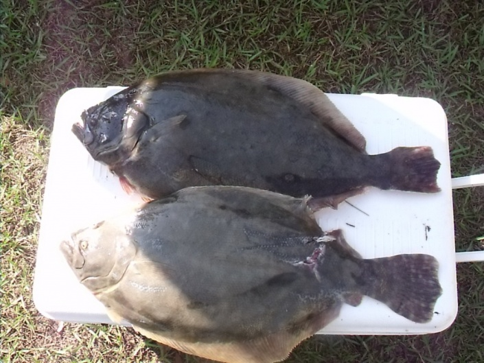 Heads or tails-11-17-11-fish2-jpg