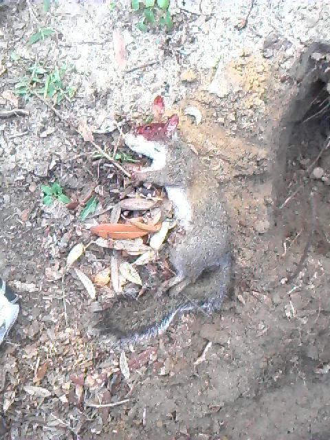 Squirrel Issues-110800_0753%5B00%5D-jpg
