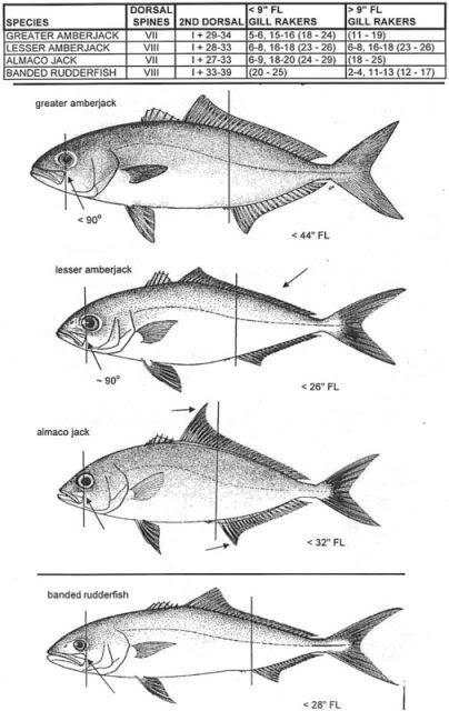 Fish ID-128668-jpg