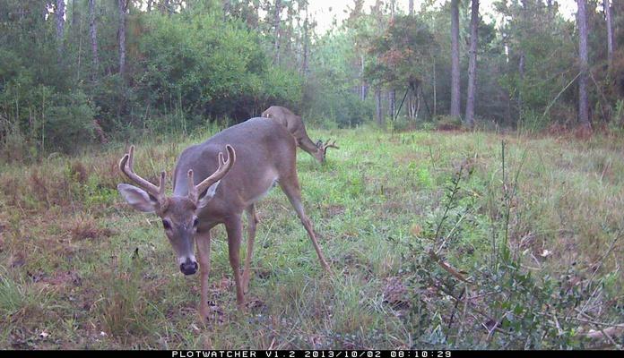 Deer Test-131002aa_frame183-jpg