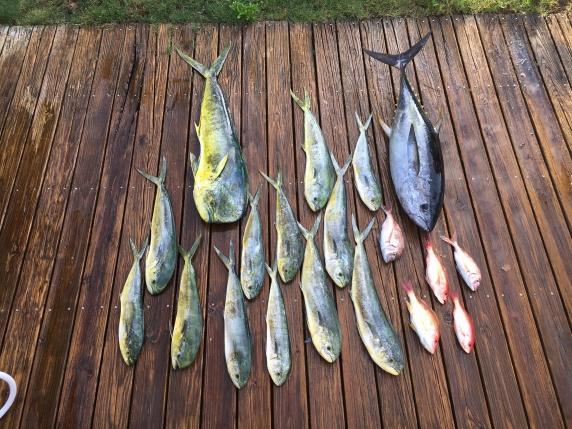 Tuna/ Dolphin 6/3/16-13305116_10100695367330596_173415175990463530_o-jpg