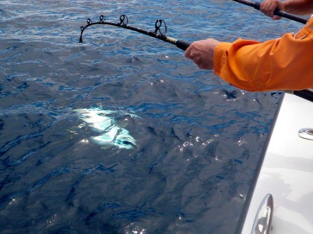August Tuna Fishing-Super Strike Charters-1395-jpg