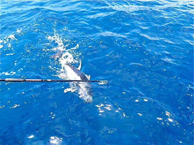 August Tuna Fishing-Super Strike Charters-1396-jpg