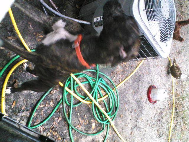 Need to find a dog a home-1452354_725077950854883_1457556096_n-jpg