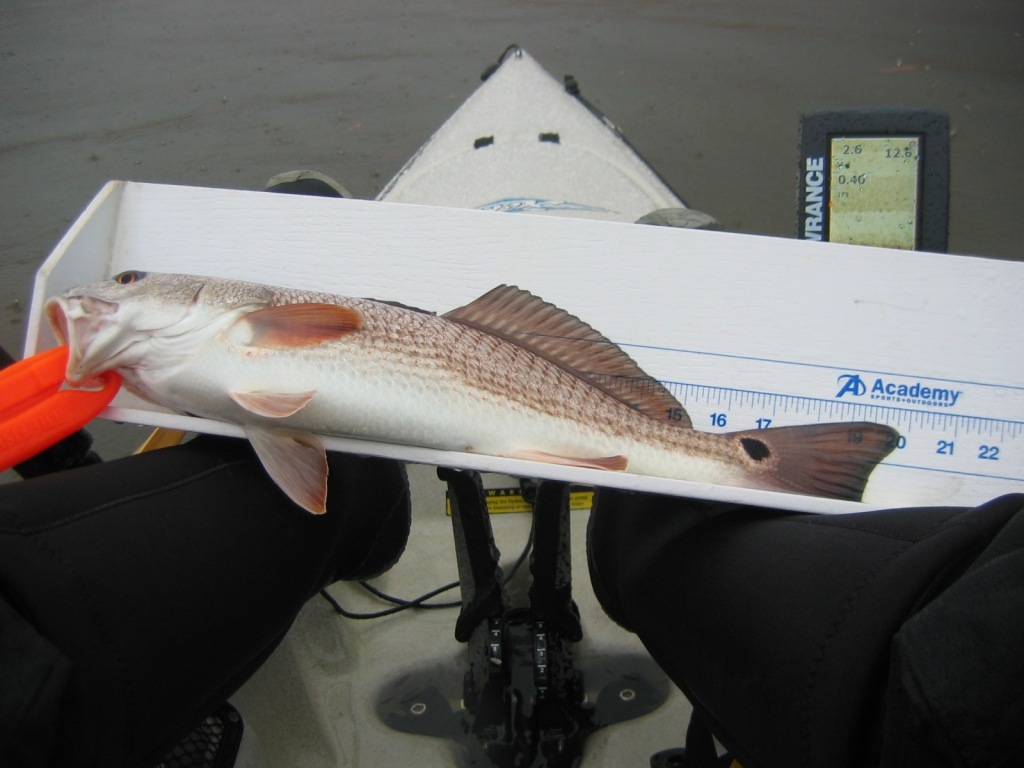 Simpson River - 1 Feb-19-inch-redfish-2-jpg