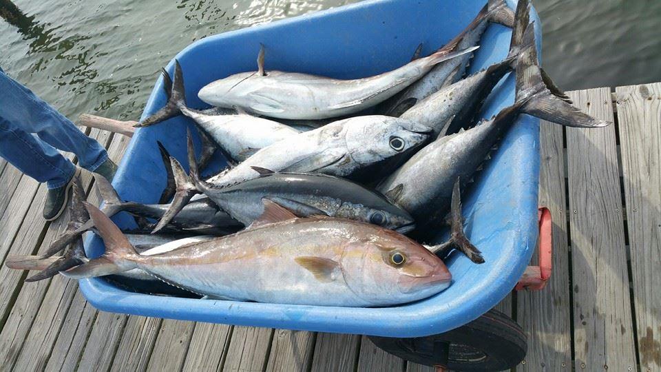 Fishing Reel Hard- rig trip 3-20/3-21-19591_1088284184518474_1550914913019246244_n-jpg
