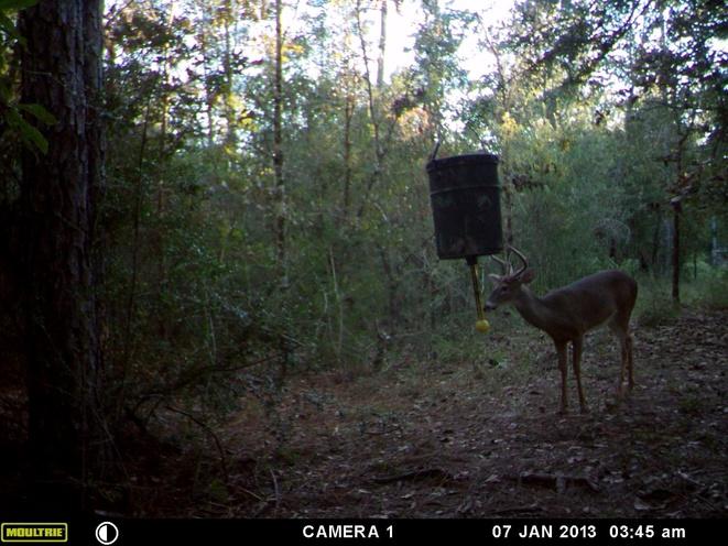 Deer Test-1b-jpg