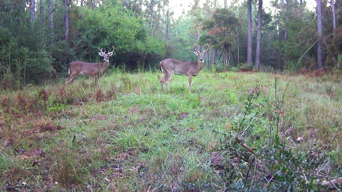 Deer Test-2-bucks-jpg