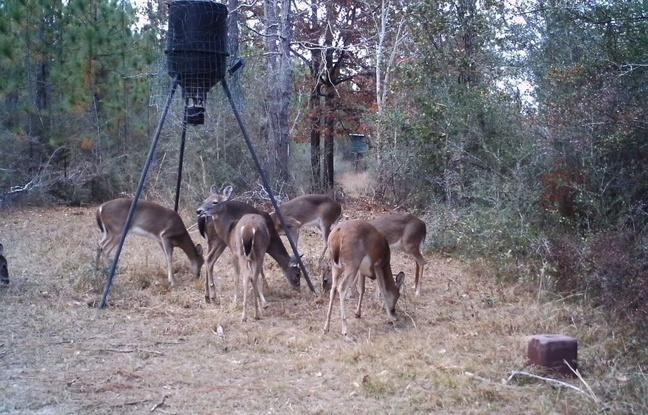 Deer Test-2-jpg