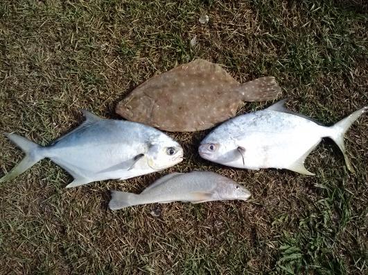 JB Memorial Weekend-2-pomp-flounder-whiting-jpg