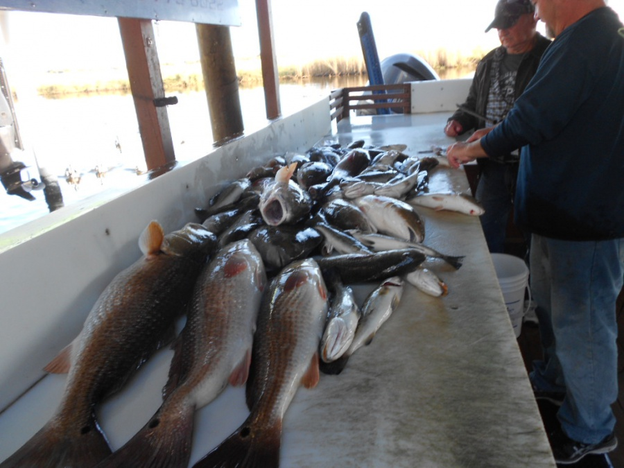 Port Sulpher, Louisiana, Happy Jack, two days of extreme catching fish-20-jpg