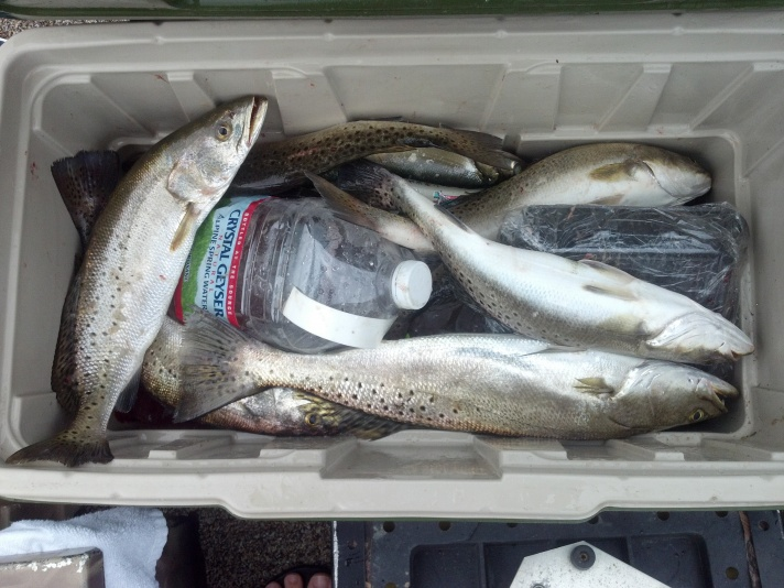 topwater trout-2012-08-11_08-01-00_175-jpg