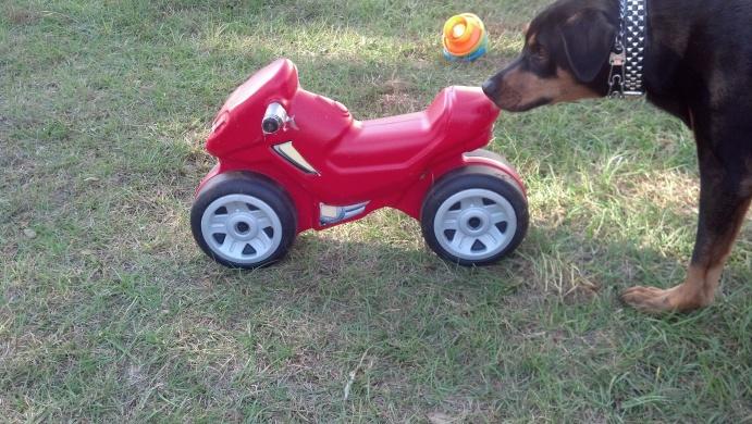 Kid stuff/toys-2012-11-03_15-39-21_386-jpg
