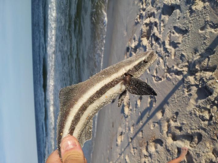 Fish id?-20120914_175413-jpg