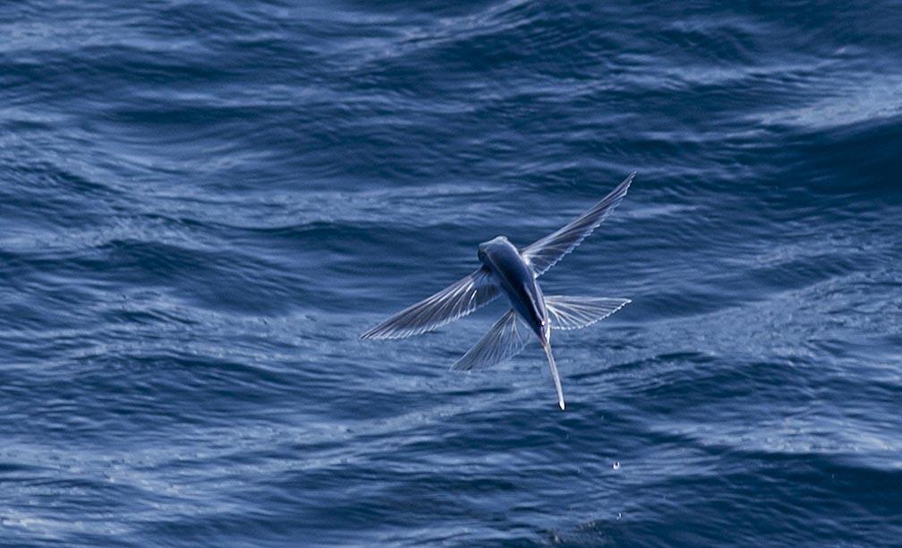 Maersk Developer - Tunas, Orcas-20141016_fishing_instigator_0085-jpg
