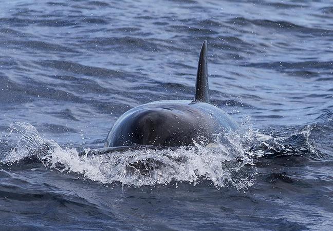 Maersk Developer - Tunas, Orcas-20141016_fishing_instigator_0267-jpg