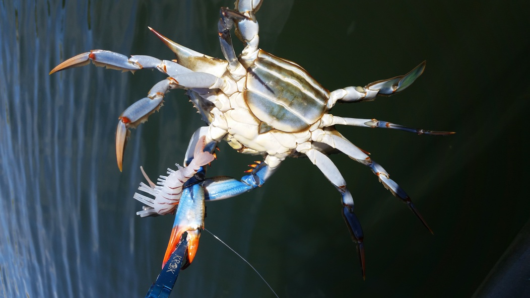 Stud trout make the world go round!-20141029_121337-jpg