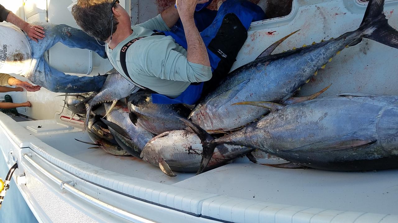 Yellowfin tuna!-20170201_164800-jpg