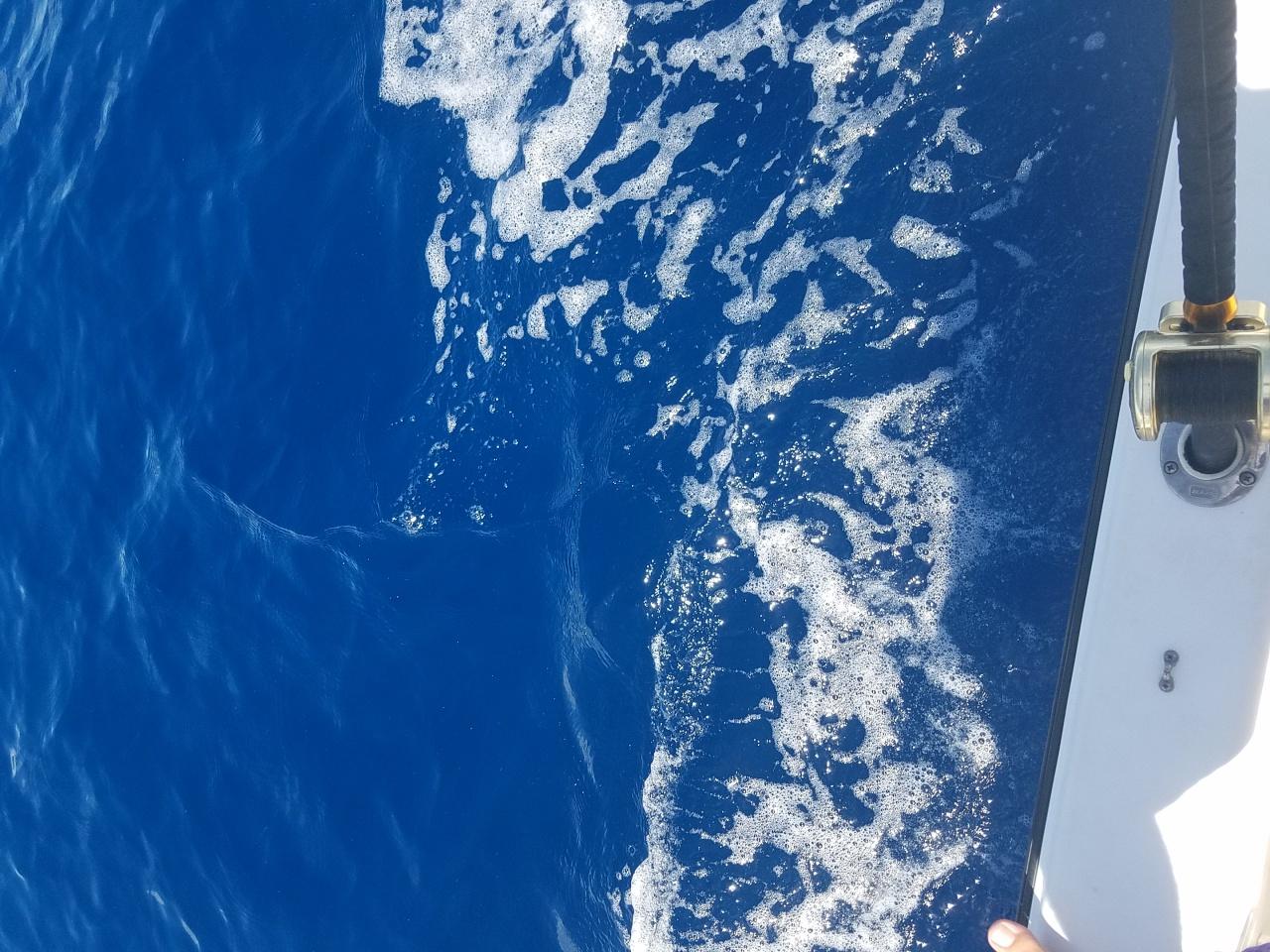 Looking for blue water-20170811_135730-jpg