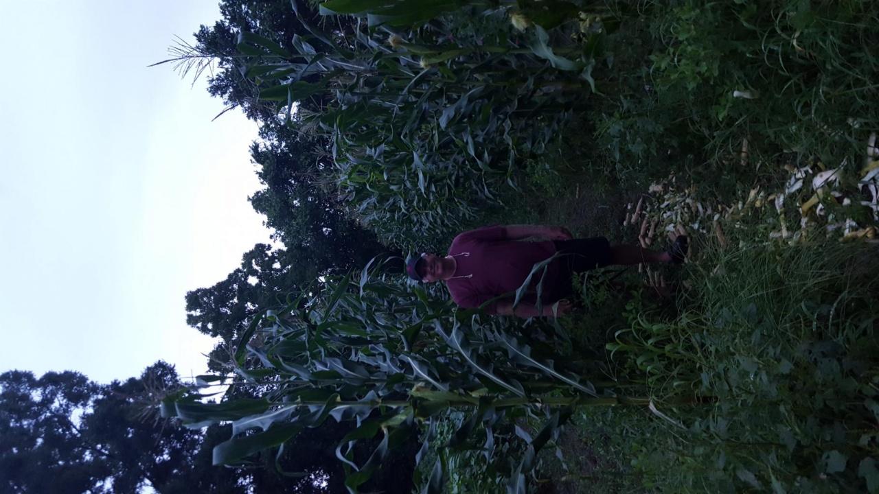 It's harvest time-20180612_195153_1528858907925-jpg