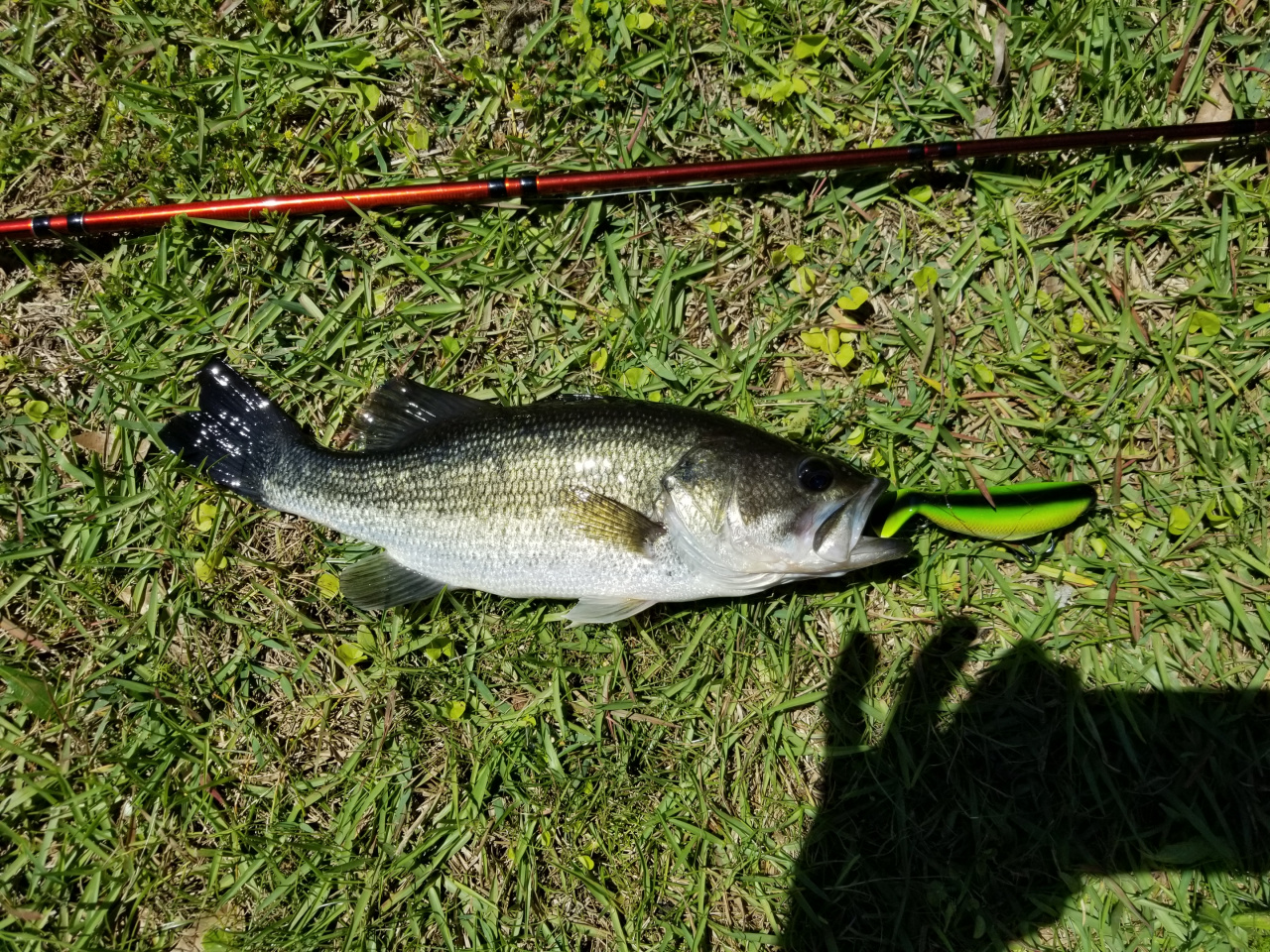 Rattle Trap Top Water Lure-20190415_112621-jpg