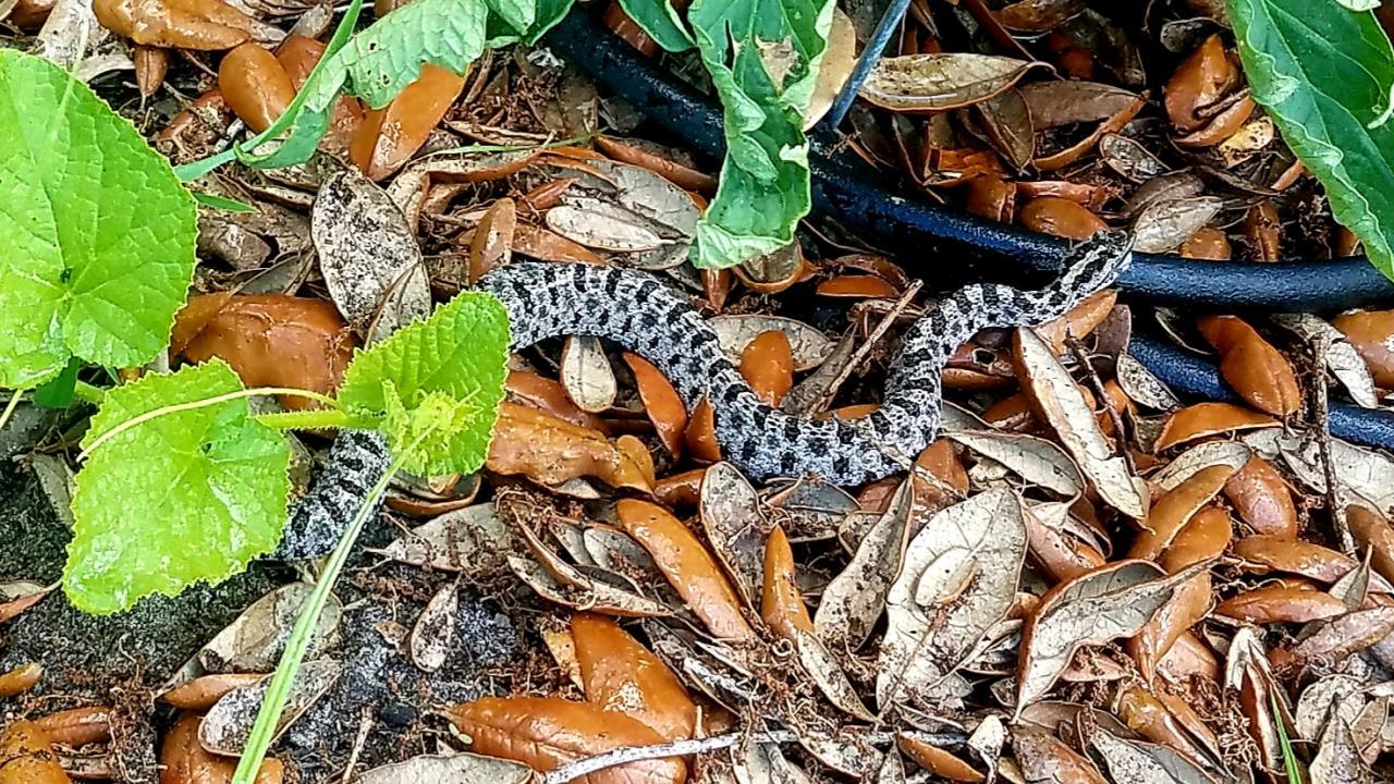 Snake ID-20190616_132346_1560801443836-jpg