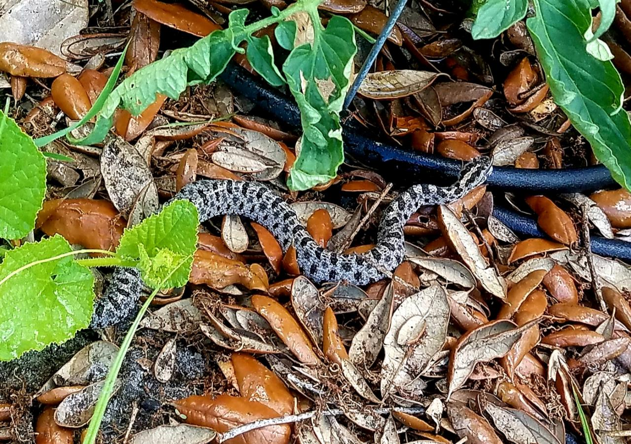 Snake ID-20190616_132414_1560801403644-jpg