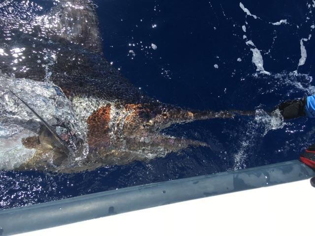 6/24/16 Blue Marlin-2076-jpeg