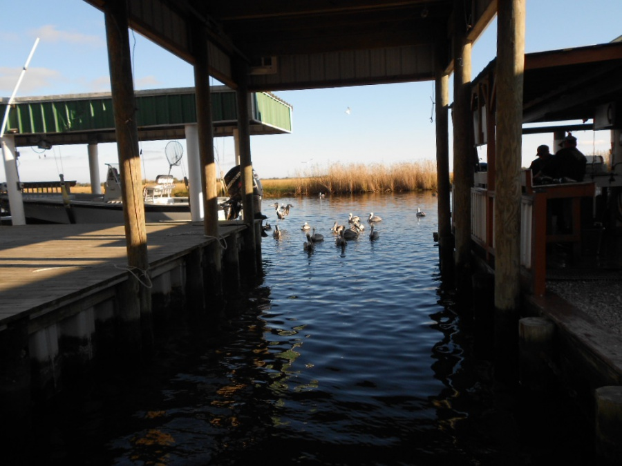 Port Sulpher, Louisiana, Happy Jack, two days of extreme catching fish-21-jpg