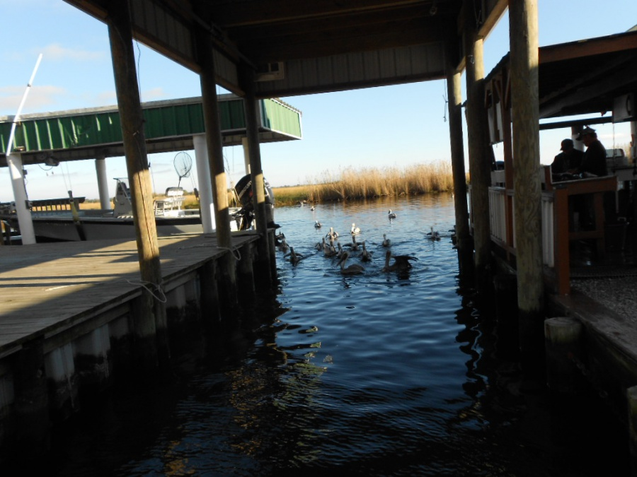 Port Sulpher, Louisiana, Happy Jack, two days of extreme catching fish-22-jpg