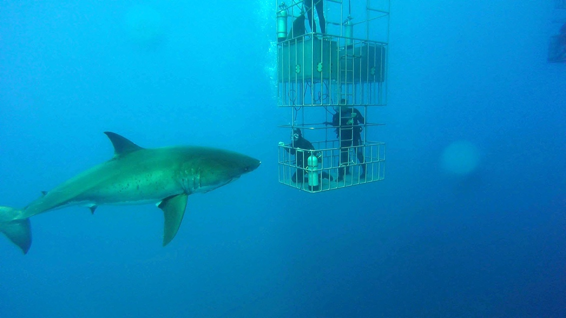 Guadalupe Island - Diving With Great Whites-245-6-jpg